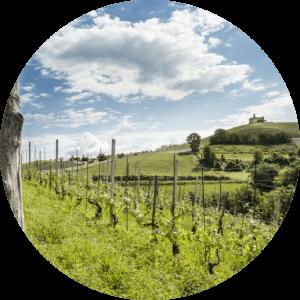 Panorama Bricco del Cucù Langhe Selvagge Dolcetto di Dogliani